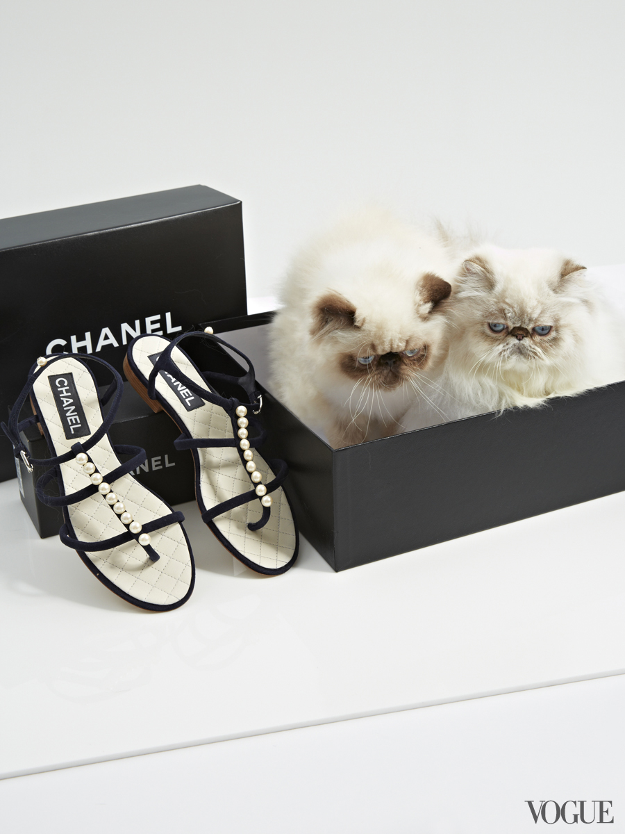Vogue, Persian Kittens, Chanel