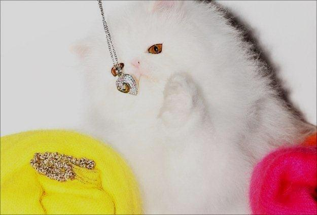 Juicy Couture, Pearsian Kitten