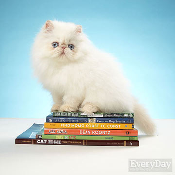 Every Day. Persian Cat on Books