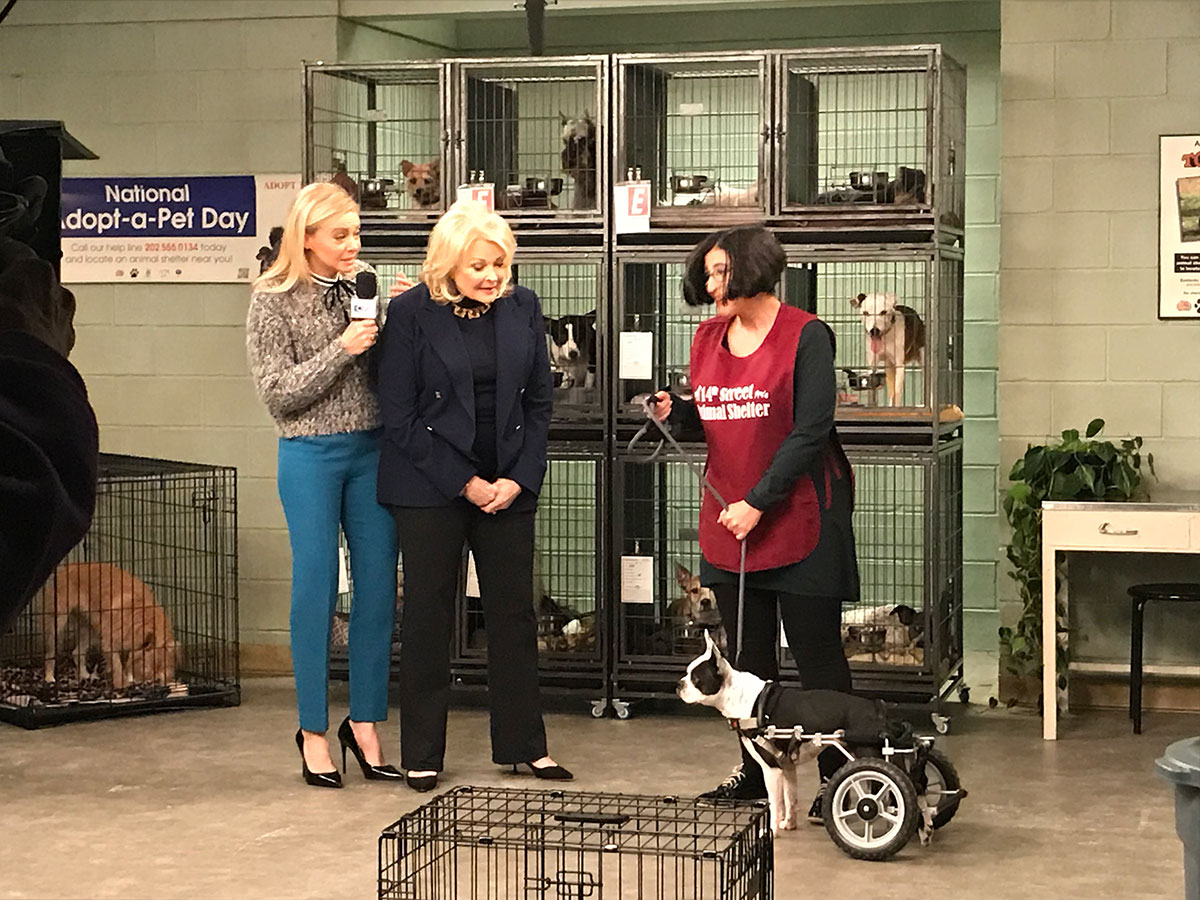 Murphy Brown, Faith Ford, Candice Bergen, shelter & wheelchair dogs