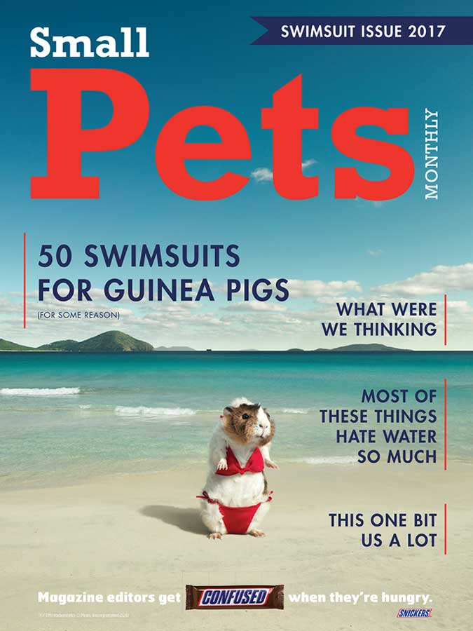 Sports Illustrated, SI, Snickers, Guinea Pig in Bikini